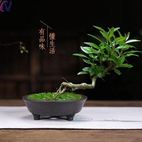 紫砂花盆99包邮长方形盆景花卉植物盆栽陶瓷花盆文竹