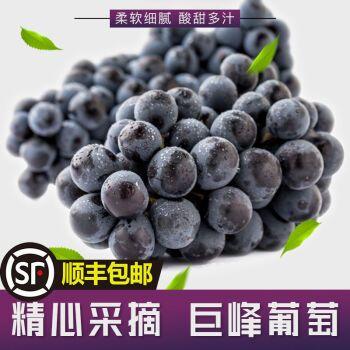 辽南巨峰葡萄现摘现发非夏黑新鲜当季好果孕妇水果顺丰 4斤精品净重
