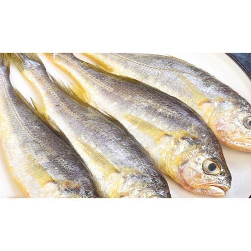 黄花鱼海捕小黄花鱼11条/斤新鲜小黄鱼海鲜冷冻深海大黄花鱼冰黄鱼