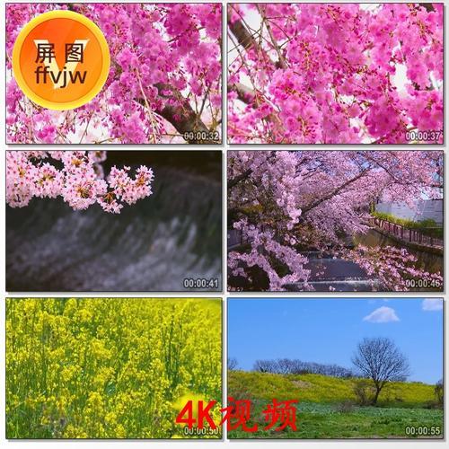 4k唯美桃花林樱花和油菜花春天春暖花开万物复苏高清实拍视频素材