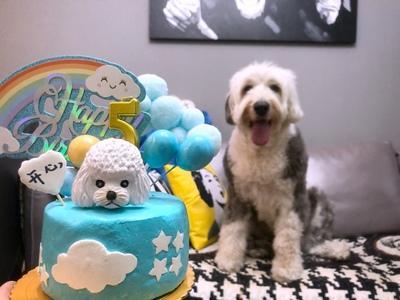 湖南长沙宠物蛋糕牛肉鸡肉做的猫咪狗狗能吃的生日蛋糕
