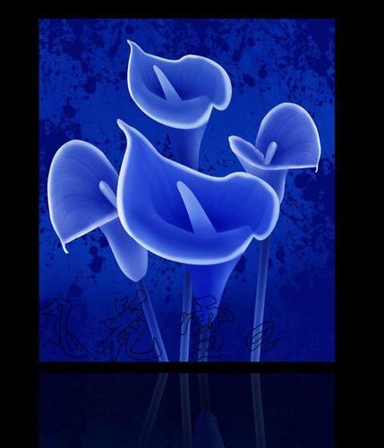 超清晰彩色十字绣重绘图纸/源文件 蓝色马蹄莲