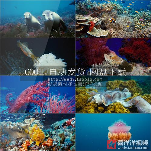 c001海底世界海洋生物植物珊瑚鱼群水母乌龟深海高清