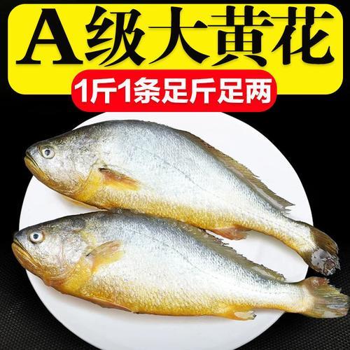 整箱东海大黄花鱼新鲜大黄鱼鲜活冷冻黄生鲜海鲜类批发水产大海鱼 5斤