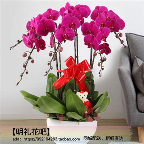 扬中句容泰兴鲜花店送同城紫色蝴蝶兰盆栽开业贺寿