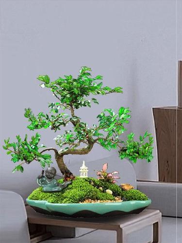 手工盘景微景观微榆树盆栽迷你小叶禅意植物小盆景壮个性矮载花卉