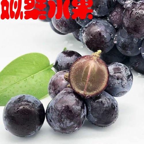现货葡萄云南夏黑无籽葡萄新鲜当季黑提黑加仑现摘现发水果黑葡萄
