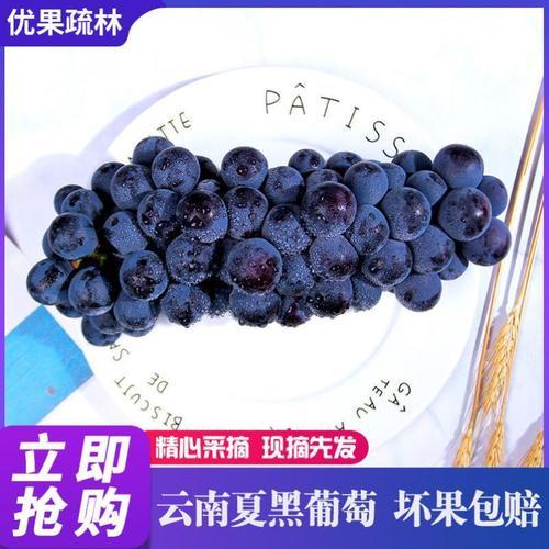 现摘葡萄新鲜时令水果夏黑无籽提子当季云南黑提红提