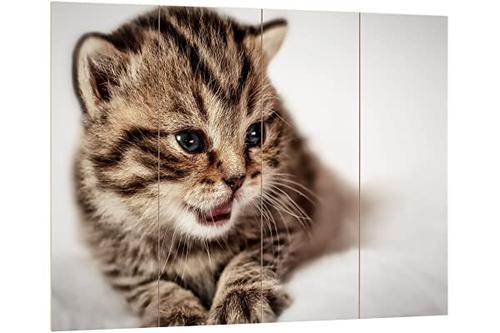 pixxprint hbvs_1536_80x60 毯子上可爱的小猫 mdf 木质图片 板状墙壁