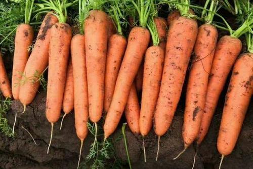 6/斤 长红胡萝卜  几十万亩三红胡萝卜基地,电商商超各种规格水洗和干