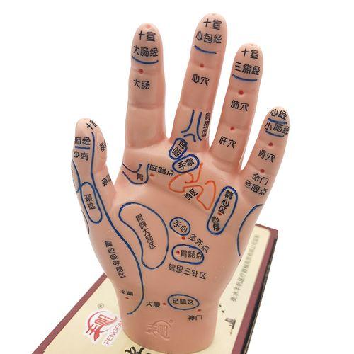 手按摩穴位图手部反射区模型手掌人体经络穴位手心手背刻字模特具