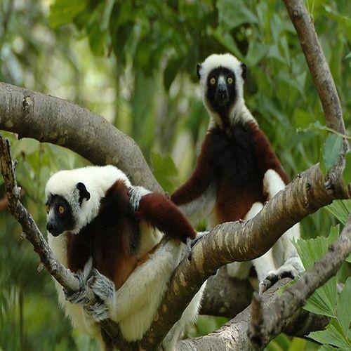 马达加斯加10日游/非洲美丽的度假圣地/猴面包树大道
