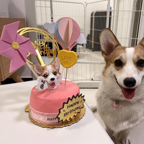 湖南长沙宠物生日蛋糕猫咪吃的蛋糕狗狗吃的蛋糕牛肉