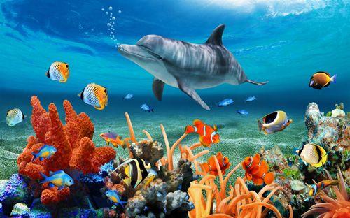 高清喷绘油画海底世界风景装饰画客厅玄关走廊餐厅卧室 dwg1014