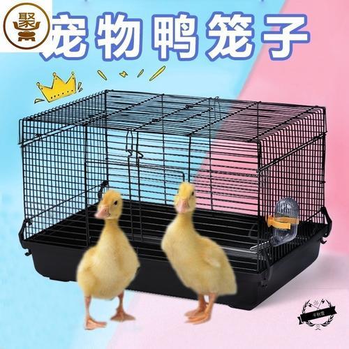 柯尔鸭笼子宠物鸭子窝别墅小房子小型豪华科尔鸭家用